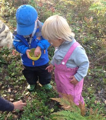 Barn som plockar blåbär